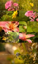 sun after the rain :: wallpaper pack by erebus-odora