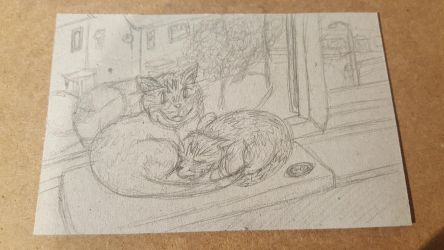 Charlie and Prawn - Cat Sketches 1 by STAR1518jb