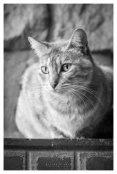 Unknown cat by Mheely