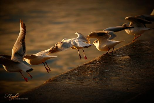 Take off by TND-Photography