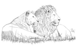 African Lions by Hanyu-Kyo
