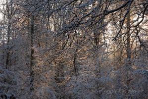 The beauty of winter V by Gambassi