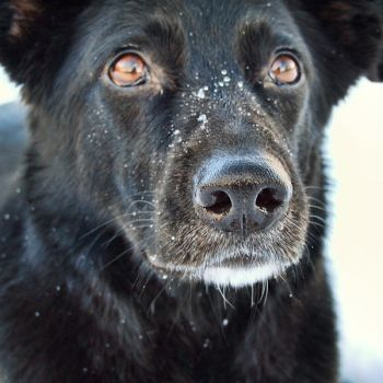 my snowy nose dOg 'Eper' by gottheedesign