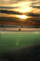 Field in southern Finland by Amalgamax