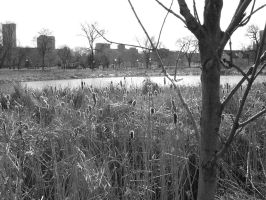 urban cattails by pexa