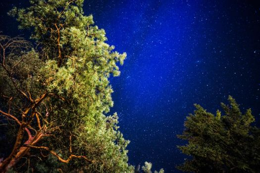 Trees and Stars by hmcindie