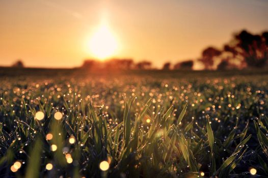 Meadow full of pearls by tomsumartin