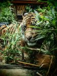 Stripes and Bamboo - Colour by InkBlotted