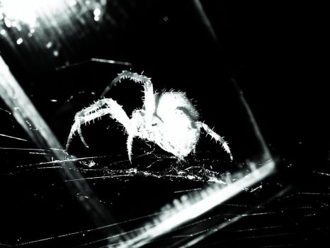 spider by jessypearce