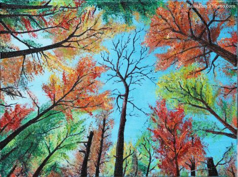 Trees in Jenny Jump State Forest by PaintPencilPhoto