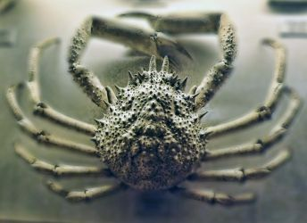 just crab by nepesh