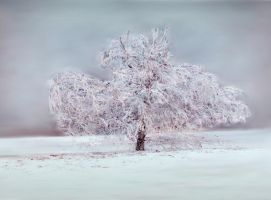 Winter tree by Olga17