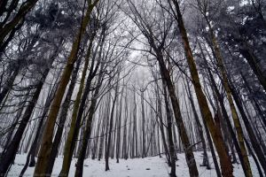 Come Into The Forest by DavidGrieninger