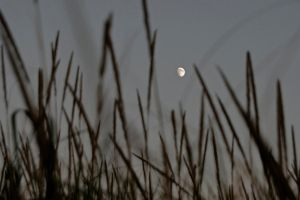 Moon Grass by BWilliamWest