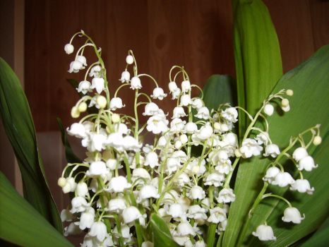 Lily of the valley by wirtin