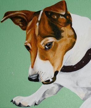 Jack Russell Terrier by buffywolf