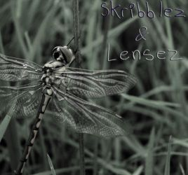 Dragonfly 1 | Set DLM by SkriBlerLenZ