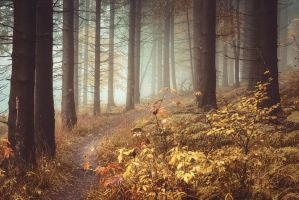 Grimms Forest by artmobe