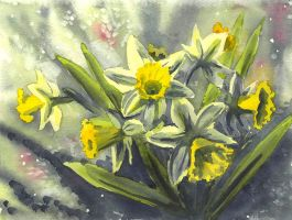 Daffodils by doma22