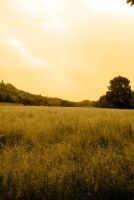 Field by AlexHolt