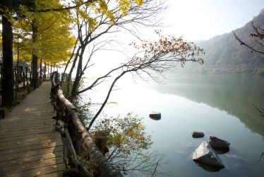 Nami Island in Autumn by uncle-sam-hk