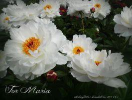For Maria by Sisterslaughter165