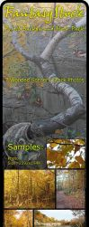 Forest Backgrounds Zip Pack 4 by FantasyStock