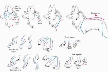 How to draw wolfs- Part2 by Kimai