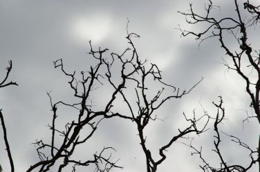 Silhouetted Branches by FallowpenStock
