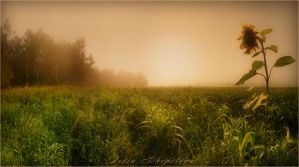 Misty Morning by julevna