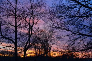Dusk in Gasport, Silhouette of Trees by gothicpoizonivy