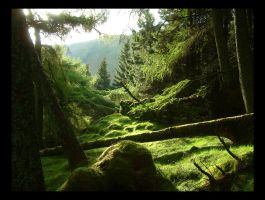 Woodland Greens by scotto