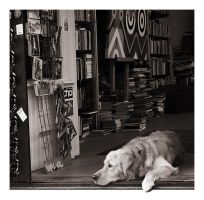 Bookstore dog by GPStrider