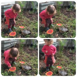 Images Mila found Red mushrooms in here garden by amalia51