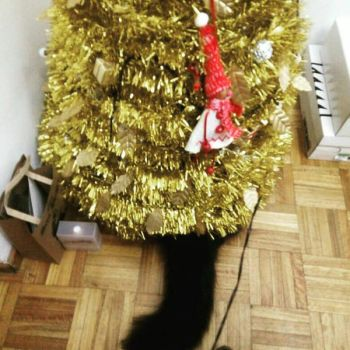 before the disaster!! christmas 2017 by Sailorferchy