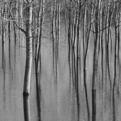 Trees in Water by MarioDellagiovanna