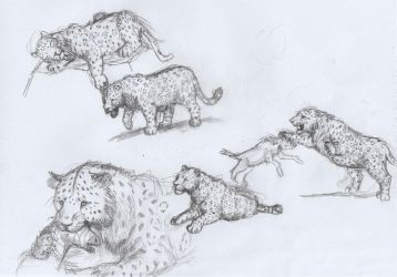 Panthera onca mesembrina sketches by AnonymousLlama428
