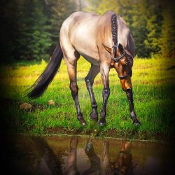 Bay Walk HEE Premade by VIP-EquineArt