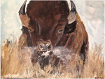 American Bison by goshilpa