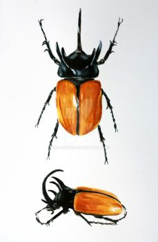 Naturalist painting lesson : insects by Emi-Gemini