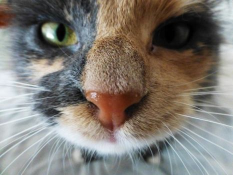 Photo: Kitty nose by Mariesen