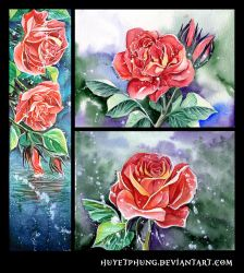 Roses by HuyetPhung