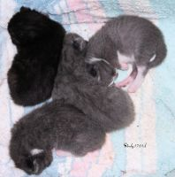 6 days old by cindy1701d