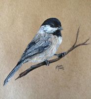 Black-Capped Chickadee by KristynJanelle