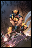 Wolverine by Furlani