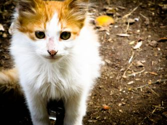 cat by esmail11