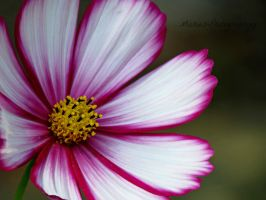 Pretty Flower by Michies-Photographyy