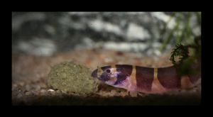 Eye Of The Loach by Hector42