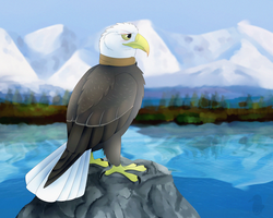 Mr Eagle by seagaull