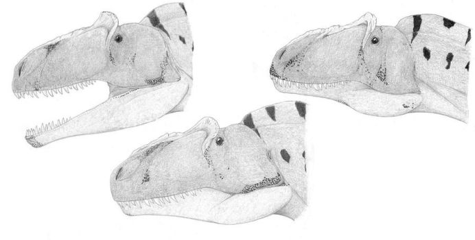 The Many Faces of Allosaurus fragilis by pilsator